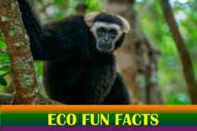 Angkor Zipline has fun eco facts durings your tours